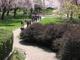 /cherry-blossom-5k-run/